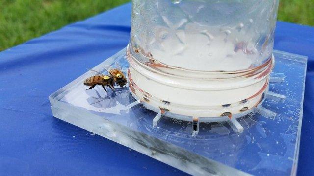 Se descifra el lenguaje de las abejas para ayudarlas a comer mejor