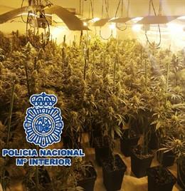 Policía Nacional Nota De Prensa Y Foto (La Policía Nacional Se Incauta En Vélez