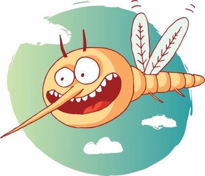 ¿Cómo huelen los mosquitos el sudor humano?
