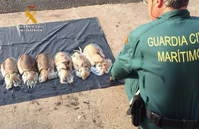 Nota De Prensa La Guardia Civil Sorprende A Un Nuevo Furtivo Pescando En Santand