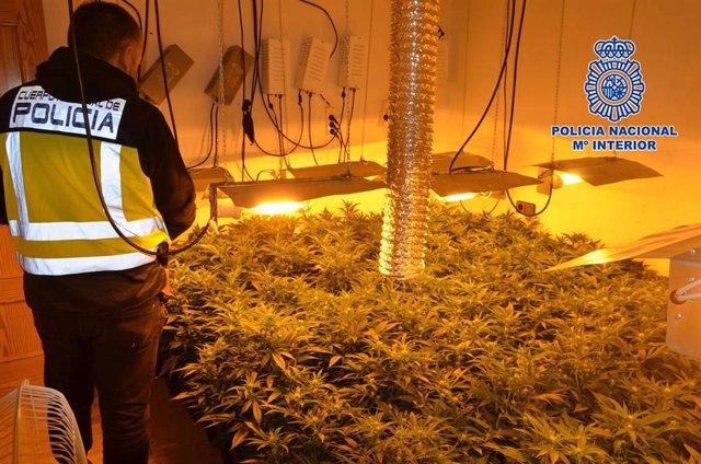 Sucesos.- Policía Nacional desmantela una plantación 'indoor' de marihuana en Mo