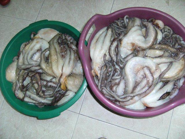 Almería.-Inspección pesquera decomisa 137 kilos de pulpo inmaduro en los puertos
