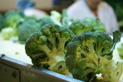 Los valores nutricionales del tronco del brócoli. ¡No lo tires!