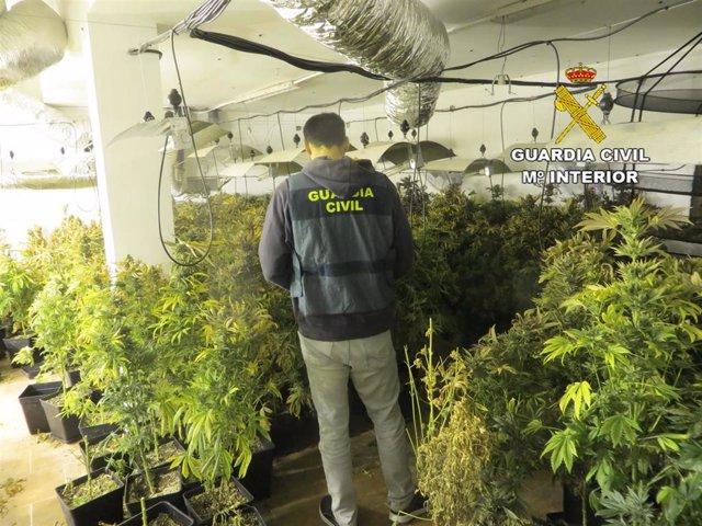 Almería.- Sucesos.- Detienen a una persona acusada de tener 425 plantas de marih