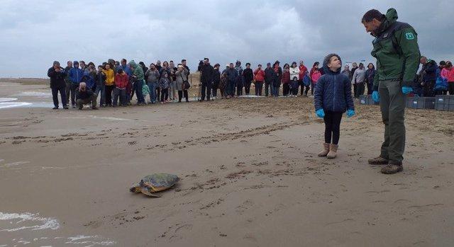 Alliberades en el Delta de l'Ebre (Tarragona) cinc tortugues atrapades en xarxes