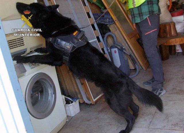 Guardia Civil desmantela un punto de venta de droga al menudeo en Cehegín