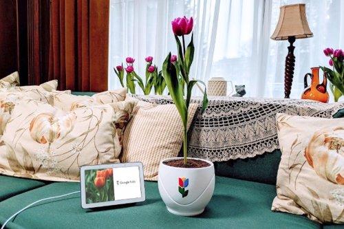 Tulipanes, cucharas y limpiadores de pantalla son las bromas que ha elegido Goog