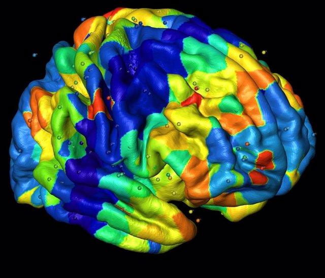 Cerebro, pliegues cerebrales, corteza cerebral