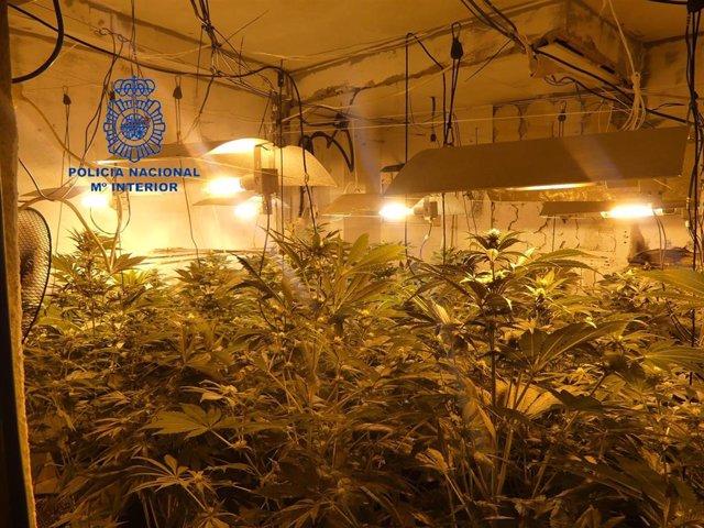 Valencia.- Sucesos.- Desmanteladas en Alzira siete plantaciones de marihuana con
