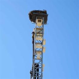 Endesa cede al Ayuntamiento de Lleida una torre eléctrica en desuso para nido de