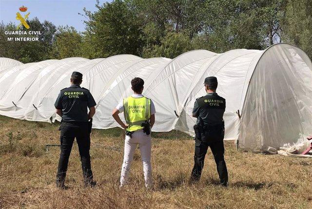 Huelva.-Sucesos.-Desmantelado un cultivo de marihuana que usaba agua de un arroy