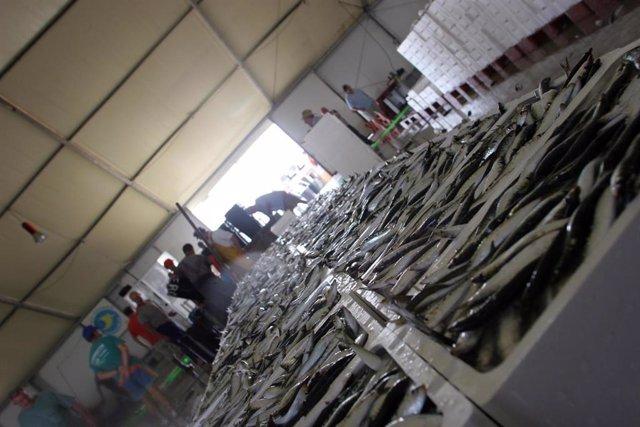 """El sector pesquero español y portugués pedirá capturar """"como mínimo"""" 15.425 tone"""