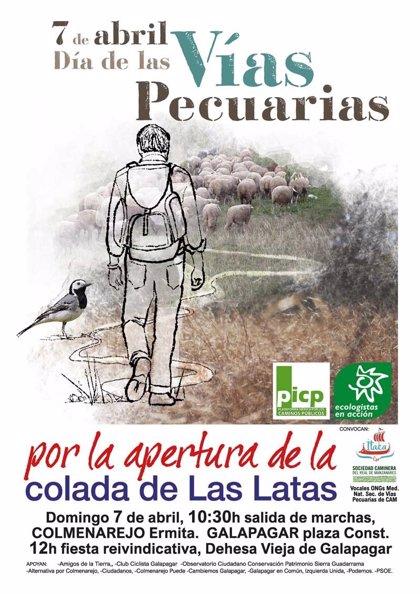 Ganadería.- Un millar de ovejas merinas trashumantes pasarán el domingo por Galapagar y Colmenarejo en defensa de las vías pecuarios