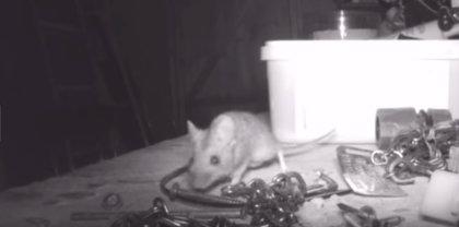 Un pequeño ratón se encarga de colocar el taller de un hombre por las noches