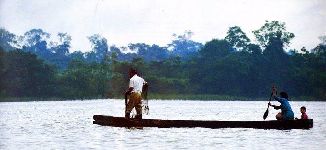 Los árboles en la Amazonía revelan perturbaciones humanas pre-coloniales