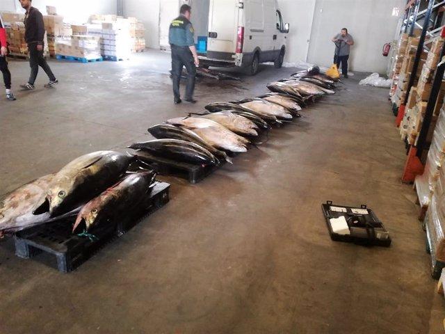 Cádiz.-Sucesos.- Guardia Civil entrega 1.128 kilos de atún rojo al Banco de Alim