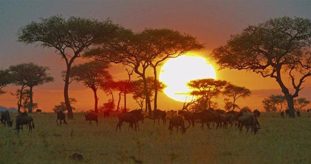 Serengueti lleva el parque natural de Tanzania a la pequeña pantalla