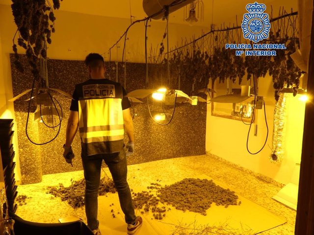 Granada.- Sucesos.- Desmantelado un punto de venta de marihuana con más de 700 p