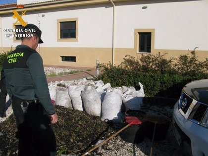 La Guardia Civil investiga a diez personas por robo de aceitunas en las provincias de Córdoba y Jaén
