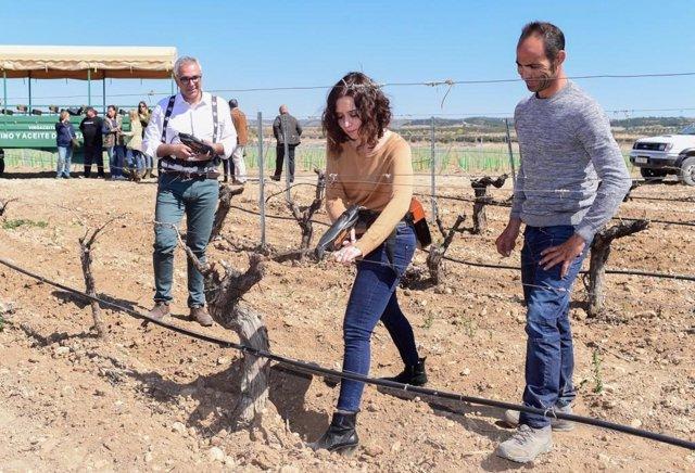 """Díaz Ayuso apostará de manera """"decidida"""" por el vino de Madrid para alcanzar las"""