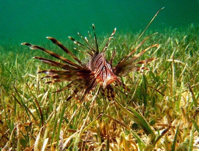 El daño potencial del 94% de las especies exóticas invasoras marinas no se ha cu