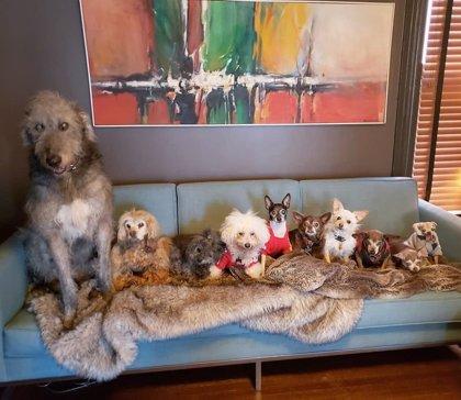 Un hombre adopta a perros mayores para darles una atención especial y un nuevo hogar