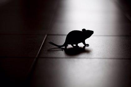 ¿Sabes dónde vive el Ratón Pérez? Según una clínica dental de Chile, vive con ellos