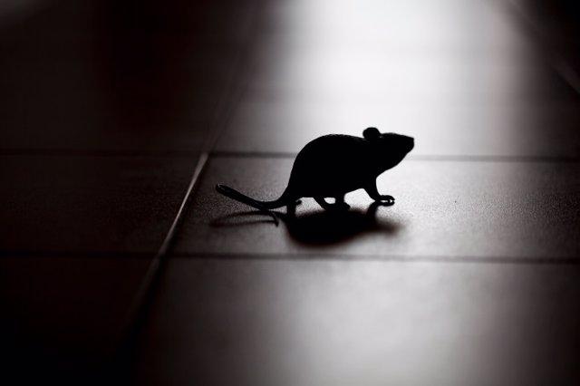 Rata, ratón, ratita