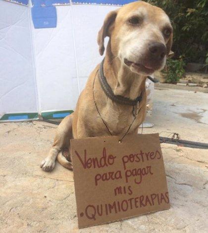 Una joven vende postres para costear la quimioterapia del perro de su hermana
