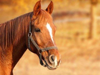 Graban cómo una camioneta impacta por accidente contra un grupo de caballos y mata a cinco, en Argentina