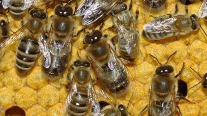 Una invasión de abejas interrumpe un partido de fútbol en Argentina