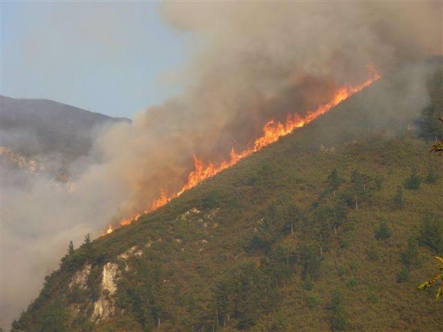 Rural.- La Coordinadora Ecologista pide la dimisión del secretario de UCA tras ser condenado por incendiar un monte