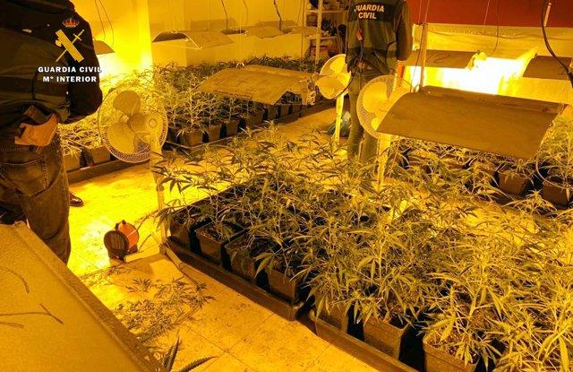 Desmantela en Sonabia una plantación de marihuana e interviene cinco tipos de estupefacientes diferentes