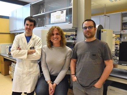 Un estudio del Sincrotrón Alba constata la ineficacia de fármacos contra la diabetes