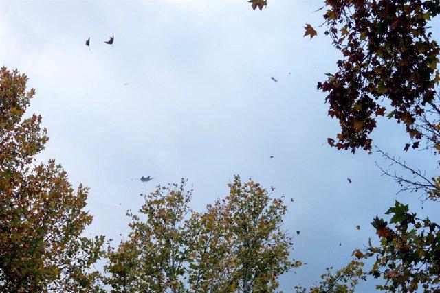 La lluvia y el oleaje tendrán este martes en riesgo a La Coruña y Pontevedra y el viento a Albacete