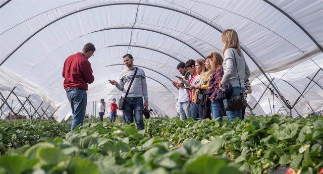 Periodistas nacionales conocen la producción de la fresa en Huelva.