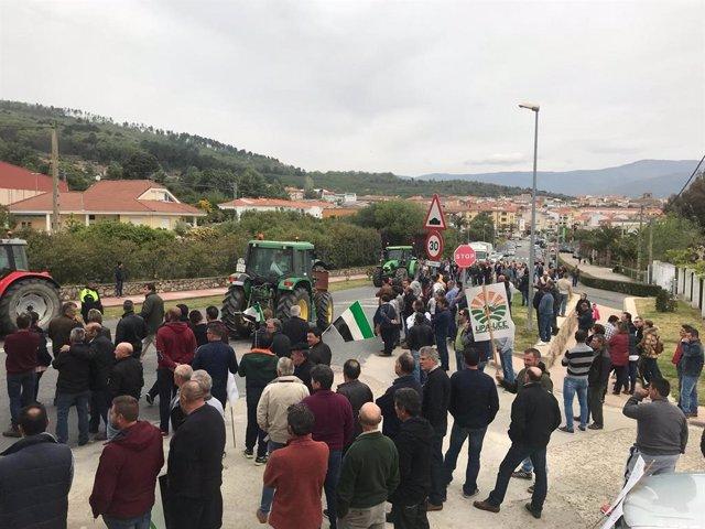 Agricultores se concentran en Jaraíz de la Vera para reclamar a las industrias una subida de precios para el pimentón