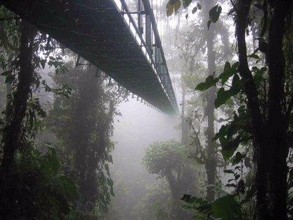 El cambio climático podría reducir hasta el 80% de los bosques nubosos del hemisferio occidental