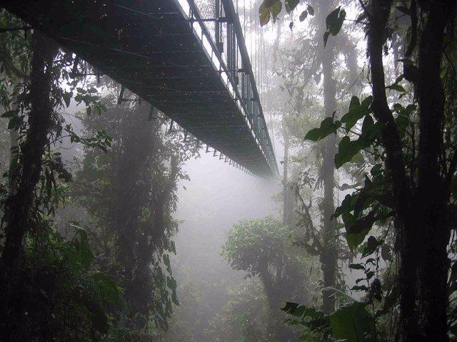 El cambio climático amenaza con diezmar los bosques nubosos americanos