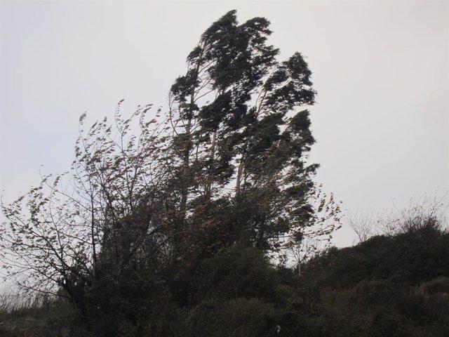Activado este miércoles el aviso amarillo por fuertes rachas de viento