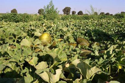 Toledo acogerá un seminario sobre las últimas novedades en I+D+i en cultivos hortícolas