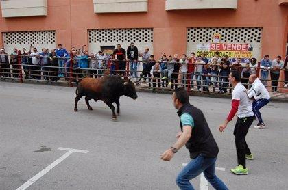 Finalizan sin incidentes graves los encierros de la fiesta del Toro Embolao de Los Barrios (Cádiz)