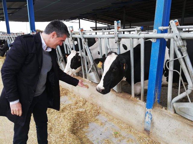 La Región produce más de 60 millones de l itros de leche fresca de vaca