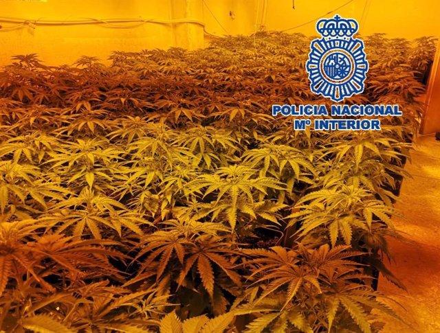 Málaga.- Sucesos.- La Policía Nacional desmantela tres invernaderos 'indoor' y se incauta de 277 plantas de marihuana