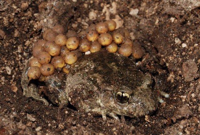 CSIC participa en un estudio que comprueba que los anfibios están en zonas más altas de las montañas que en el siglo XX