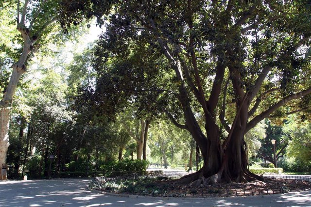 """Sevilla.- 26M.-Beltrán Pérez propone """"recuperar"""" los elementos originales del parque de María Luisa y liberar su entorno"""