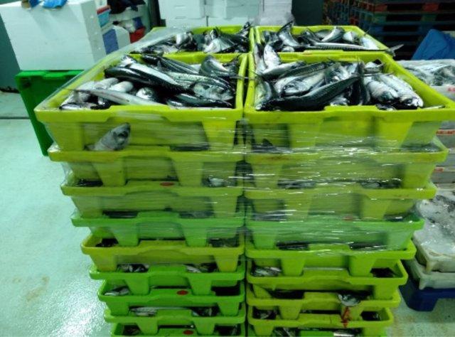 Pesca.- Intervenidos en A Coruña 4.990 kilos de caballa sin el etiquetado que garantice su trazabilidad