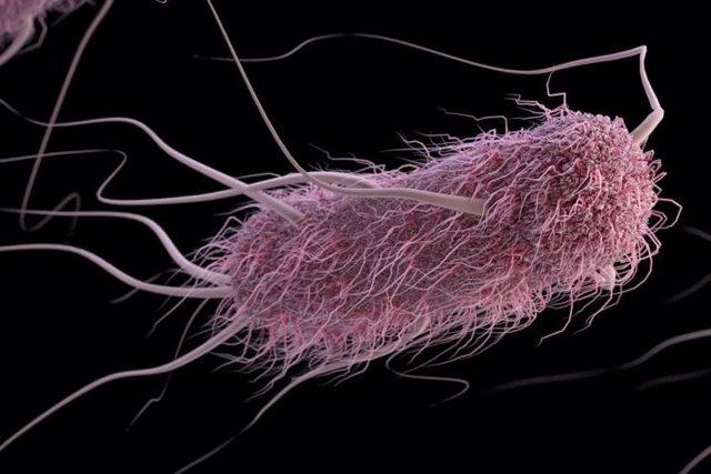 E. Coli, escherichia coli