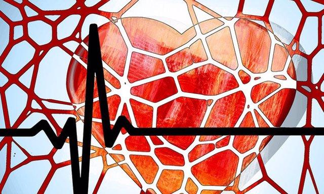 EEUU.- Describen cómo el corazón envía una señal 'SOS' a las células de la médula ósea después de un ataque cardíaco