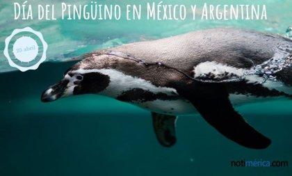 25 de abril: Día del Pingüino en México y Argentina y algunos datos curiosos que quizá no sabías